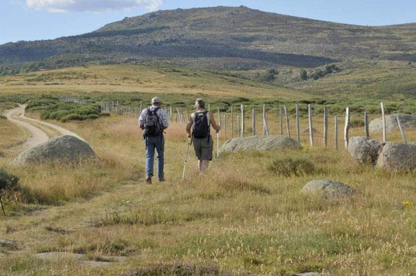 Marcher sur le Mont-Lozère