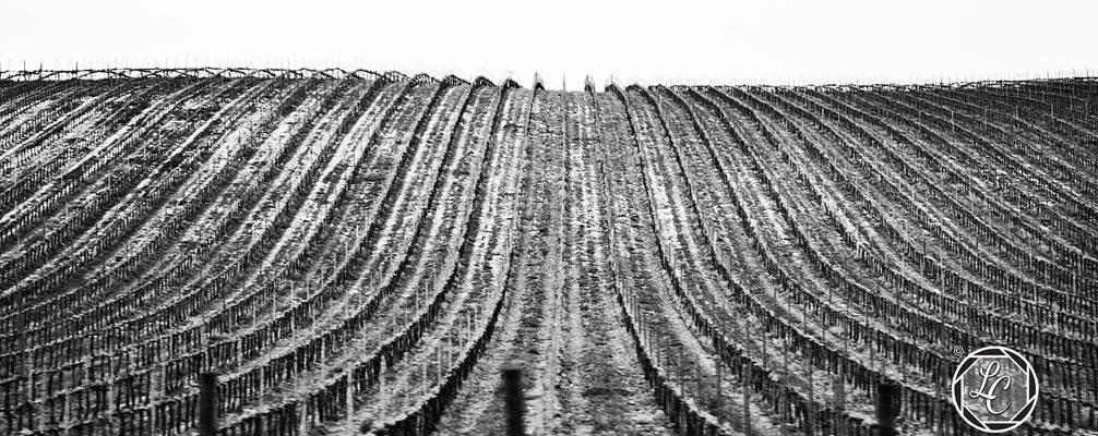 Giornata Della Terra, Umbria. © Luca Cameli Photographer