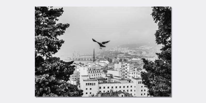 """""""Volando Su Trieste"""" Trieste dal Parco della Rimembranza. Premiato """"Premio Internazionale Ambasciatore d'Arte 2019"""" Istanbul ~ Shanghai ~ Pechino ~ Tokyo. © Luca Cameli Photographer"""