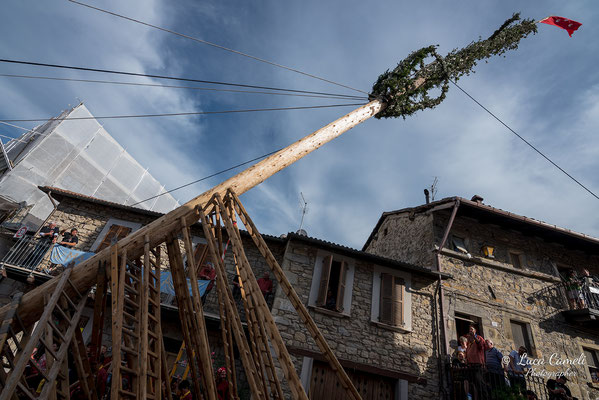FESTA BELLA 2019 ~ SPELONGA - Alzata dell'albero - RisorgiMarche