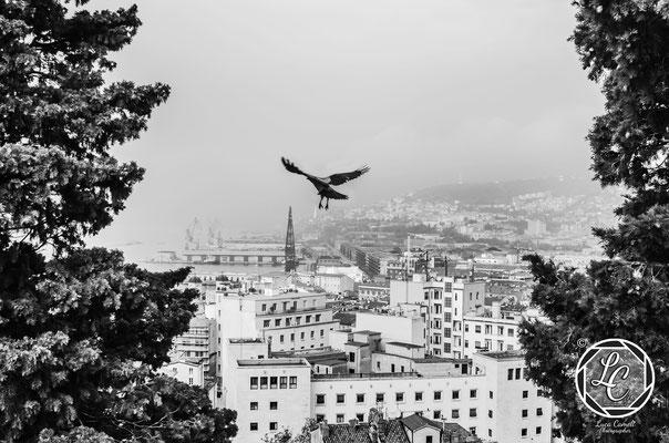 Volando Su Trieste. Pix Around 2021 asscociazione dotART. © Luca Cameli Photographer