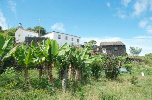 Haus, Atelier und Küchenhaus aus dem Biogarten mit Bananenstauden