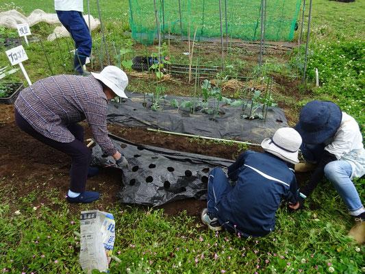 野菜を植える準備をしています。美味しい野菜が収穫できるよう、準備から頑張ります。