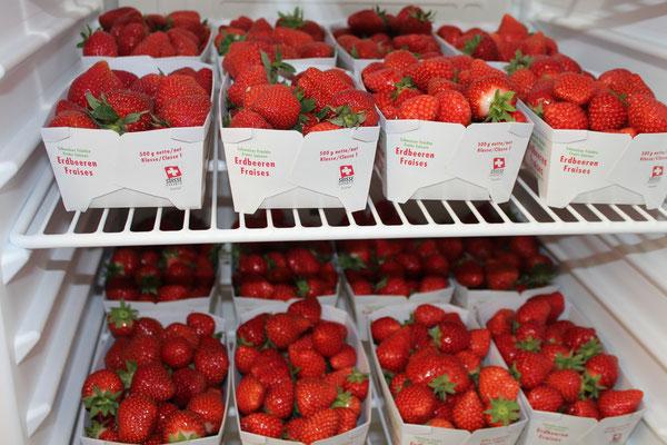 Erdbeeren vom Mai - September