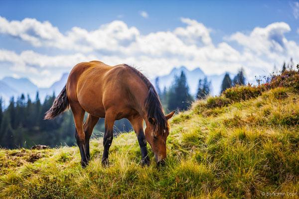 05 - Pferd