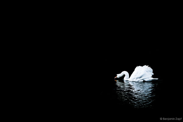 13 - Lonely Swan I