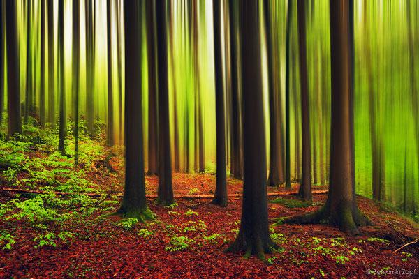 31 - Im Wald