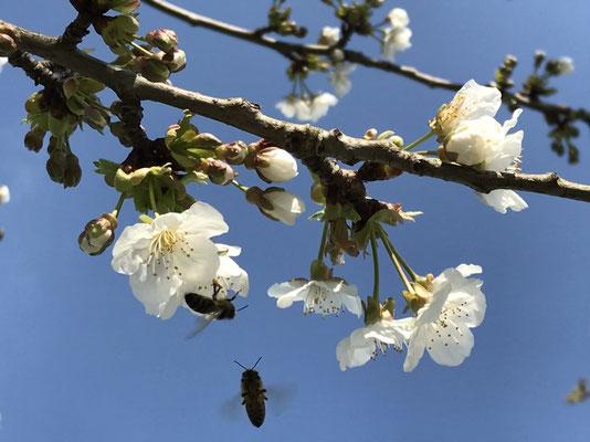 ...während der Frühling einfach weiter macht, als ob nichts wäre.