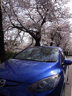 桜とデミオスポルト