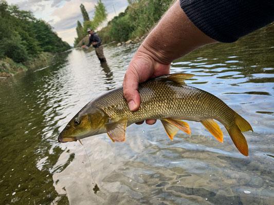 Fliegenfischen Czech Nymping auf Barben in der Schweiz