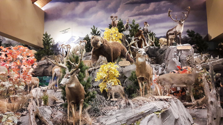 Cabelas Anchorage