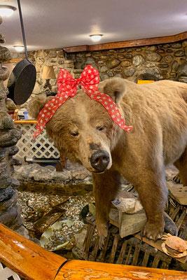 erster und einziger Bär