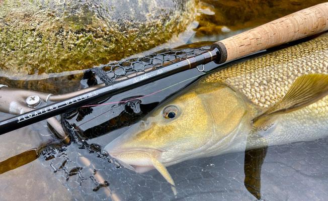 Barben Czech Fischen 11ft 2wt NEX