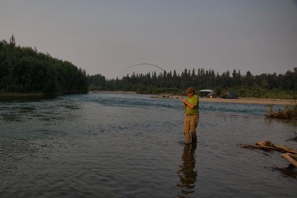 all night long - Zusammenfluss Salmon/Aniak River
