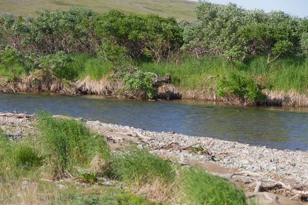 Funnel Creek Alaska