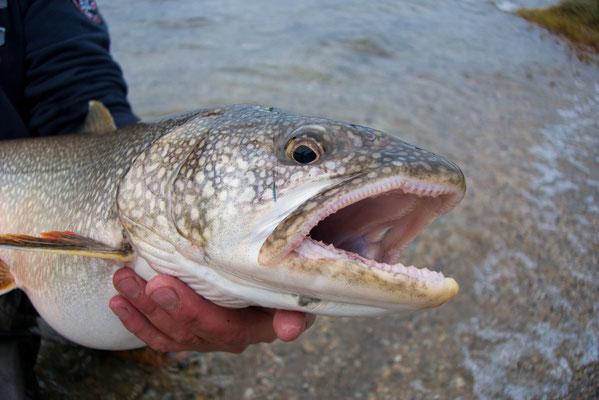 Silvio's Lake Trout Walker Lake