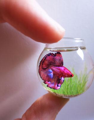 Betta pink fish