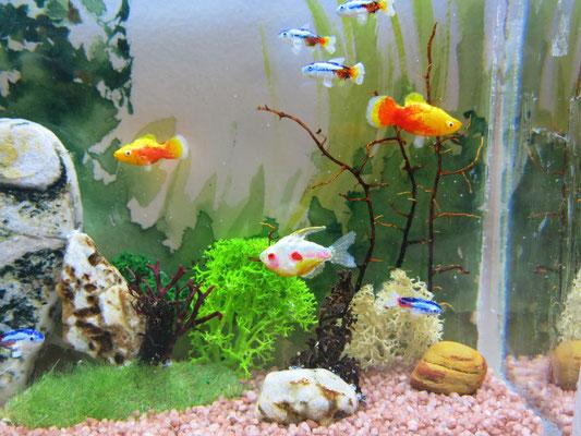 Miniature wall aquarium, size 10 x 15 x 5 cm, 1:12 scale
