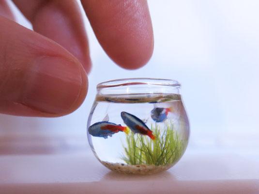neon tetra fish miniature
