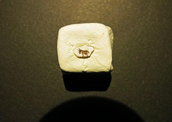 Micro-miniatura, pintura en grano de arroz, encargo para el museo Carromato de Mijas