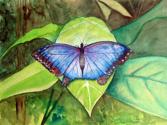 Apparent freedom, watercolor