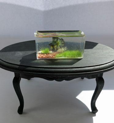Pecera con pez beta