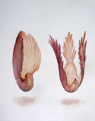 Metamorphosis, watercolor