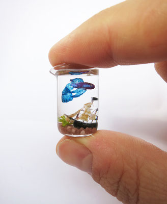 Betta fish with pirate boat