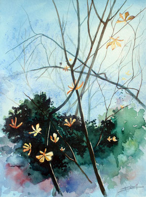 Leaves released by the light, watercolor 31x41cm