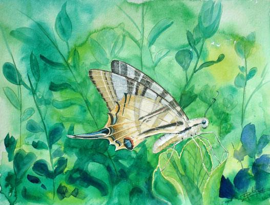 Freedom, watercolor 31x41cm