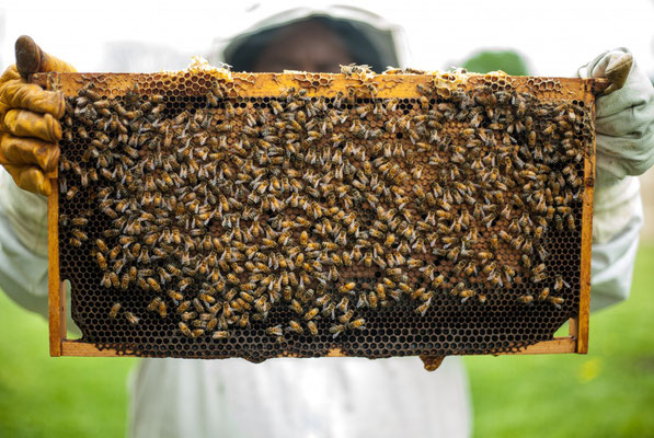 Abeilles - Apiculture - Ruches (Source pxhere)