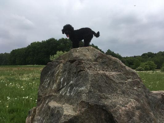 Jeder Felsen wird bestiegen