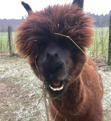 Hoho ich bin Bandito, der Neue auf dem Hof und immer gut gelaunt