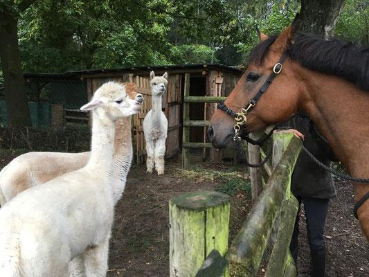 Besucher wie die Stute Fujai, die vor sieben Jahren auf diesem Hof geboren wurde, werden neugierig begrüßt.