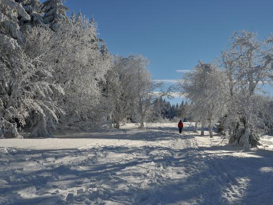 Dr. Roland Zeiger: Winter in der Rhön