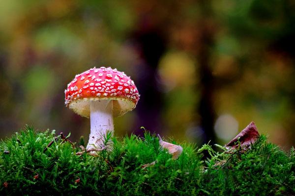 Ein Pilz steht im Walde!