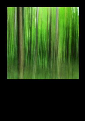 Thomas Wenzel: Wald im Sommer