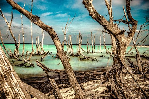 Gerold Slama: Strand mit Mangroven