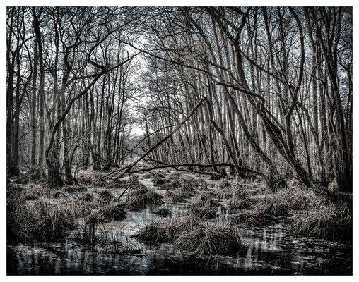 Wolfram Grusdat: Limeswald 2