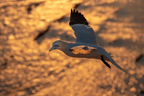 Birgit Weigand: Feuervogel