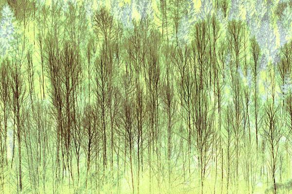 Gerold Slama: Waldstück