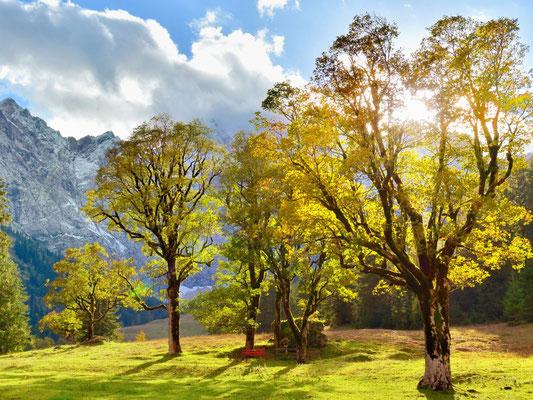 Dr. Roland Zeiger: Herbst im Karwendel