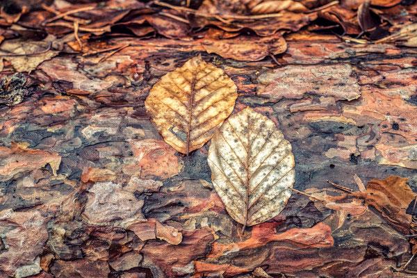 Blätterstamm