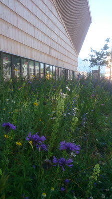 Heimische Blumenwiese