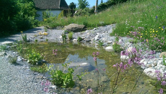 Naturnaher Gartenteich