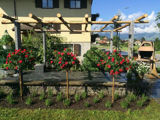 Tessinerpergola mit Rosen- und Lavendelrabatte