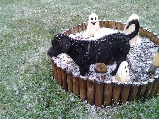der erste Schnee für Paulina