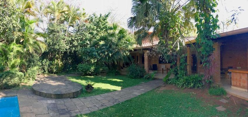 Exuberante vegetación con palmeras tropicales