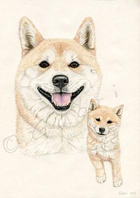 Niko & puppy Niko