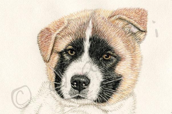 Yoji-puppy